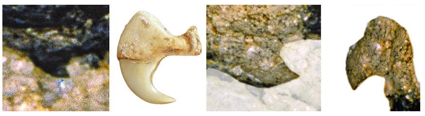 Image details compared with a lion's claw